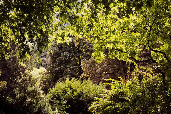 Zauberwald - © Helga Jaramillo Arenas - Fotografie und Poesie / August 2015