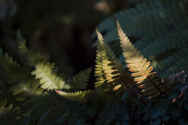 Im Wald - © Helga Jaramillo Arenas - Fotografie und Poesie / Mai 2018