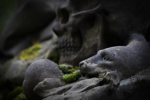 So spricht man von der Schlange Schuld - © Helga Jaramillo Arenas - Fotografie und Poesie / Mai 2014