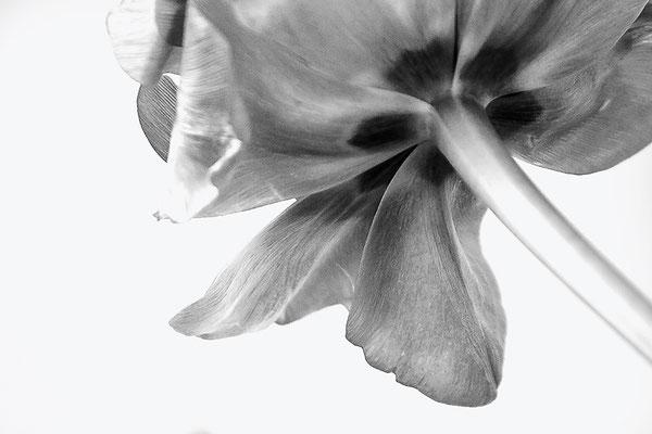 Vom Frühling geschickt (1) - © Helga Jaramillo Arenas - Fotografie und Poesie / April 2017