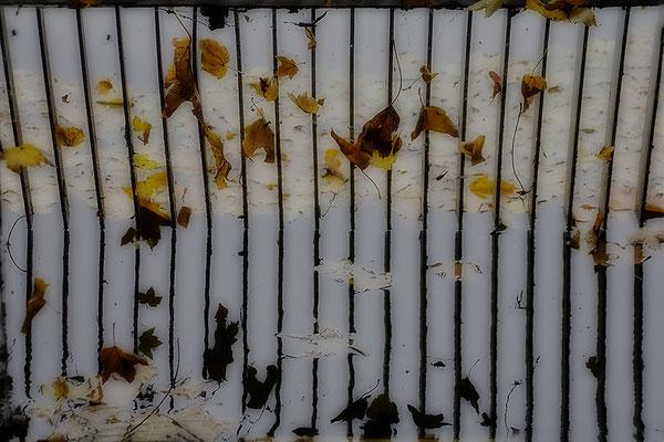 Der Herbst hält mich gefangen - © Helga Jaramillo Arenas - Fotografie und Poesie / November 2017