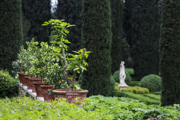 Im Garten der Schönen -  © Helga Jaramillo Arenas - Fotografie und Poesie / Januar 2021