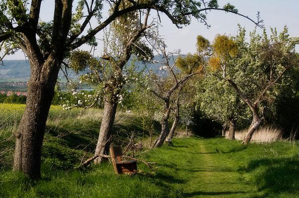 Spaziergang der Gedanken (2) - © Helga Jaramillo Arenas - Fotografie und Poesie / April 2011