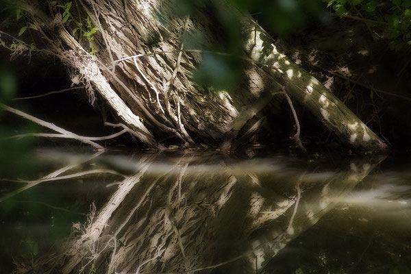 Holz (2) - © Helga Jaramillo Arenas - Fotografie und Poesie / August 2018