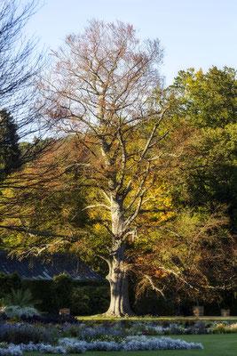 Bäume lieben -  © Helga Jaramillo Arenas - Fotografie und Poesie / September 2020