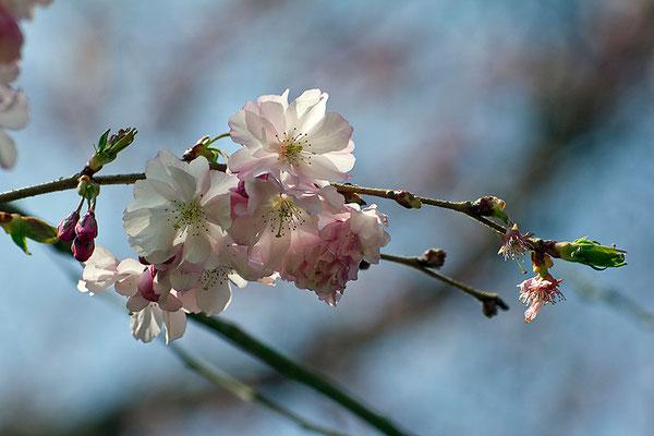Tanz in den Frühling - © Helga Jaramillo Arenas - Fotografie und Poesie / März 2015