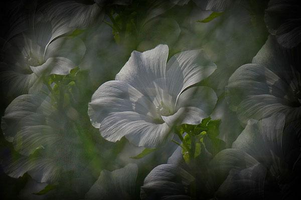 Des Sommers Abschied - © Helga Jaramillo Arenas - Fotografie und Poesie / September 2014