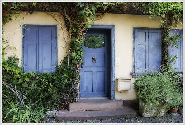 Blau in Grün gebettet / Frankfurt-Höchst - © Helga Jaramillo Arenas - Fotografie und Poesie / Juli 2017