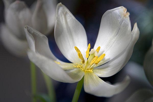 Geheimnis der Natur - © Helga Jaramillo Arenas - Fotografie und Poesie / März 2015