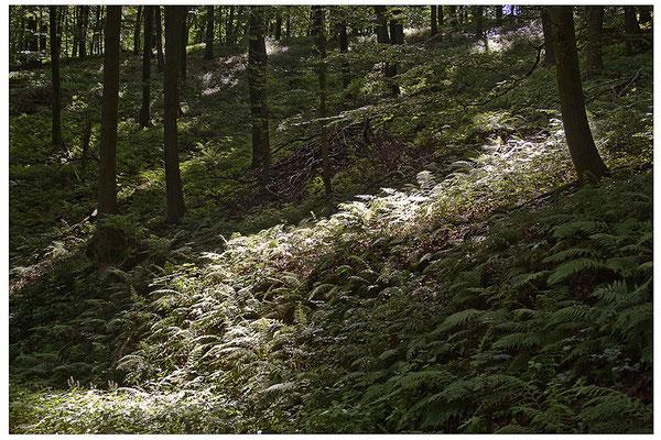 Lichtwege (1) - © Helga Jaramillo Arenas - Fotografie und Poesie / Juli 2012
