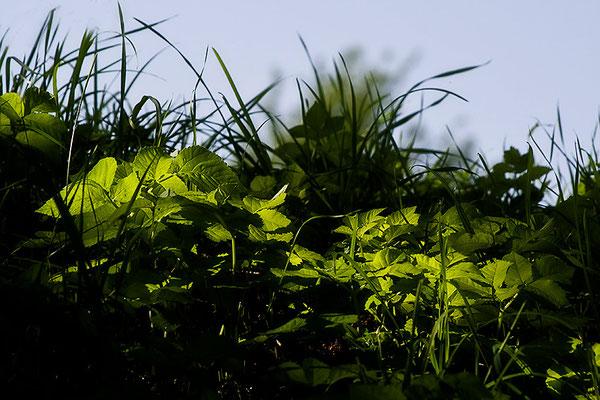 Inmitten von Grün - © Helga Jaramillo Arenas - Fotografie und Poesie / Juli 2012