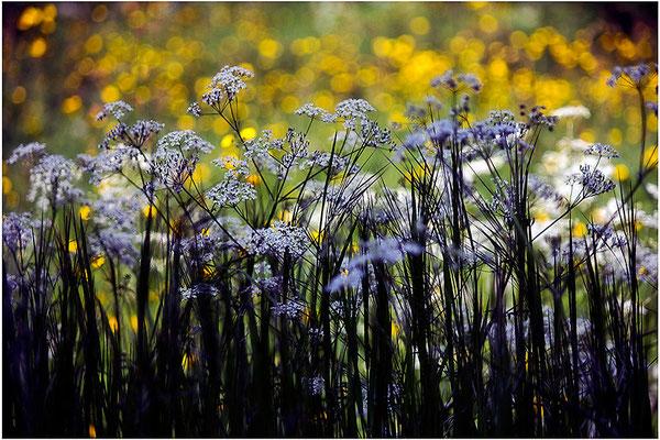 Erinnerung an einen Sommer (2) - © Helga Jaramillo Arenas - Fotografie und Poesie / Oktober 2014