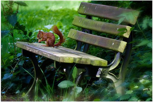 Besetzt - © Helga Jaramillo Arenas - Fotografie und Poesie / Juli 2012