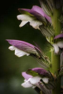 Faszinierende Pflanzenwelt - © Helga Jaramillo Arenas - Fotografie und Poesie / Juni 2018