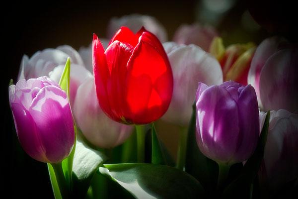 Frühlingsleuchten - © Helga Jaramillo Arenas - Fotografie und Poesie / Mai 2015