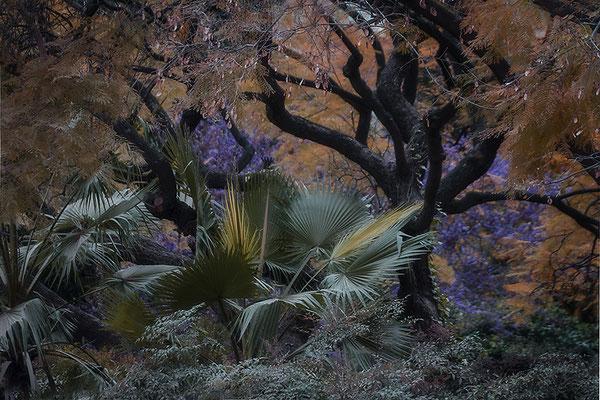 Zauberland - © Helga Jaramillo Arenas - Fotografie und Poesie / Februar 2020