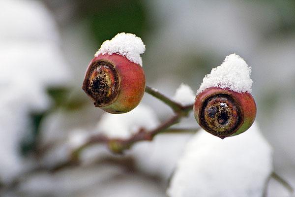 Dem Winter in die Augen geblickt - © Helga Jaramillo Arenas - Fotografie und Poesie / Januar 2016