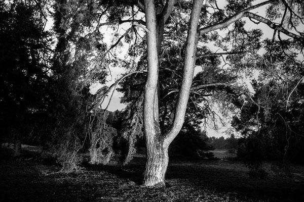 Der Baum (1) - © Helga Jaramillo Arenas - Fotografie und Poesie / September 2018