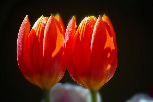 Lippenbekenntnis - © Helga Jaramillo Arenas - Fotografie und Poesie / Mai 2015