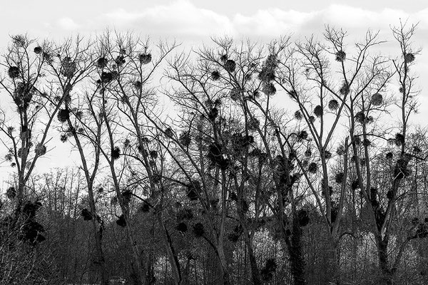 In Erwartung -  © Helga Jaramillo Arenas - Fotografie und Poesie / April 2021