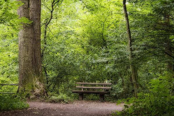 Geborgen im Wald - © Helga Jaramillo Arenas - Fotografie und Poesie / August 2018