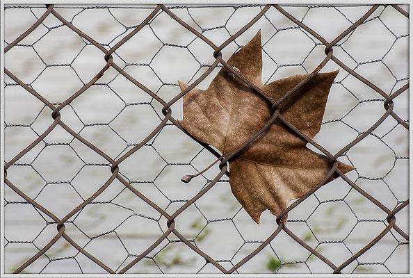 Der festgehaltene Herbst - © Helga Jaramillo Arenas - Fotografie und Poesie / April 2019