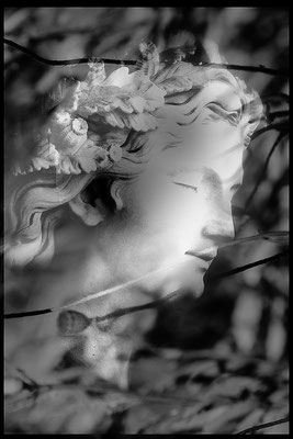 Königin des Mohnes - © Helga Jaramillo Arenas - Fotografie und Poesie  / Juni 2015