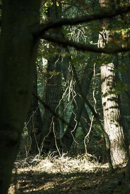 In den Wald geschaut - © Helga Jaramillo Arenas - Fotografie und Poesie / Januar 2019