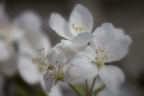 Sehnsucht nach den Blüten - © Helga Jaramillo Arenas - Fotografie und Poesie / Januar 2019