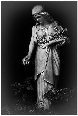 Ein Strauß von Rosen - © Helga Jaramillo Arenas - Fotografie und Poesie / Juni 2012