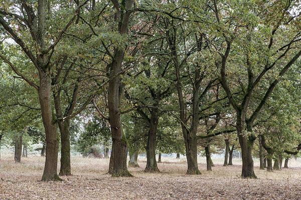 Die wandernden Bäume - © Helga Jaramillo Arenas - Fotografie und Poesie / September 2018