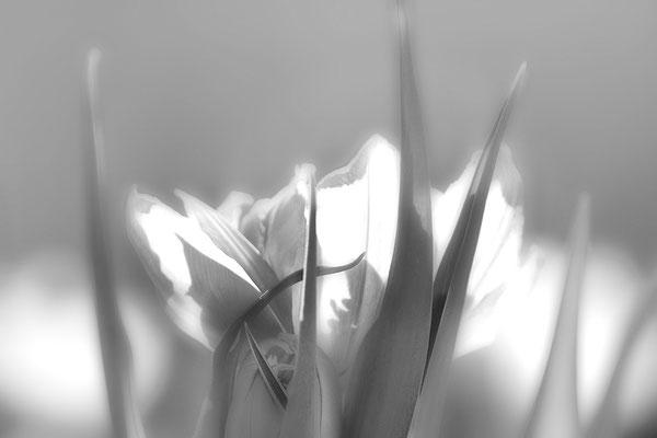 Wenn der Frühling träumt - © Helga Jaramillo Arenas - Fotografie und Poesie / April 2017