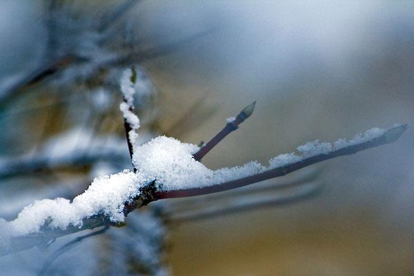 Wenn der Winter träumt - © Helga Jaramillo Arenas - Fotografie und Poesie / Januar 2016