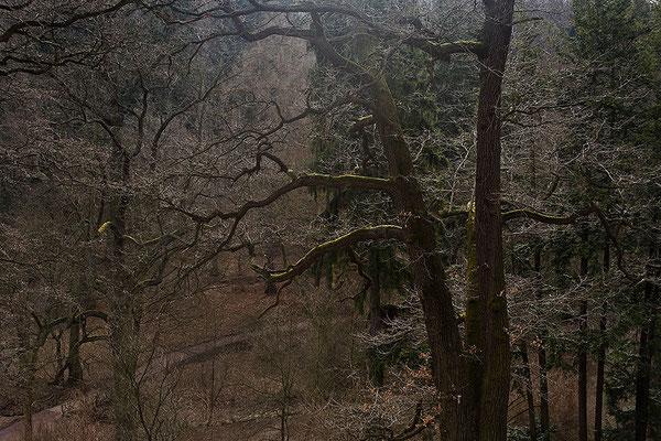 Die Träume der Bäume - © Helga Jaramillo Arenas - Fotografie und Poesie / April 2011