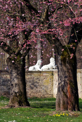 Beschützer des Frühlings / Schloßgarten Schwetzingen - © Helga Jaramillo Arenas - Fotografie und Poesie / März 2015
