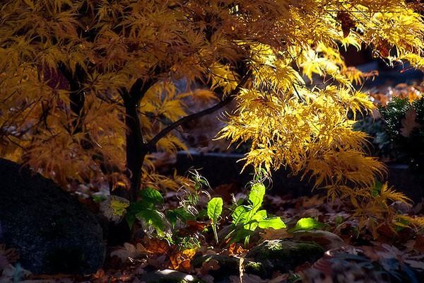 Geheimnis unterm Baume - © Helga Jaramillo Arenas - Fotografie und Poesie / September 2013