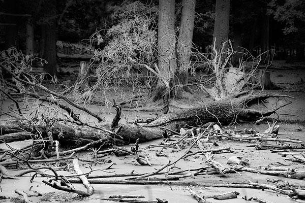 Holz - © Helga Jaramillo Arenas - Fotografie und Poesie / August 2018