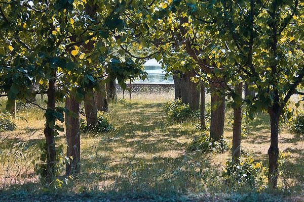 Der verwehrte Blick auf den See - © Helga Jaramillo Arenas - Fotografie und Poesie / Juni 2015