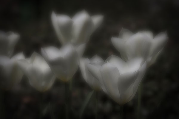 Feentanz - © Helga Jaramillo Arenas - Fotografie und Poesie / April 2019