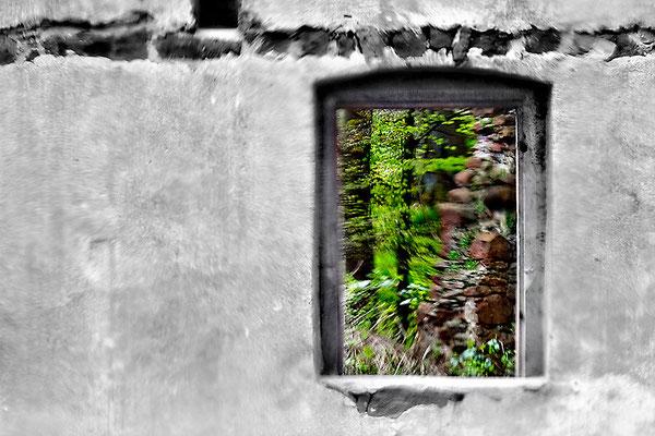Bewegter Wald - © Helga Jaramillo Arenas - Fotografie und Poesie / Mai 2015