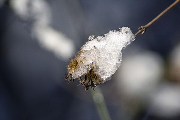 Der Kälte ausgeliefert - © Helga Jaramillo Arenas - Fotografie und Poesie / September 2018