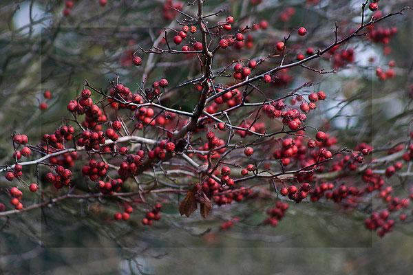 Die Sprache des Winters (2) - © Helga Jaramillo Arenas - Fotografie und Poesie / November 2011