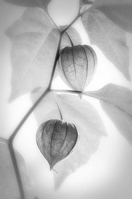 Fruchtbarkeit des Sommers (1) - © Helga Jaramillo Arenas - Fotografie und Poesie / Juli 2018
