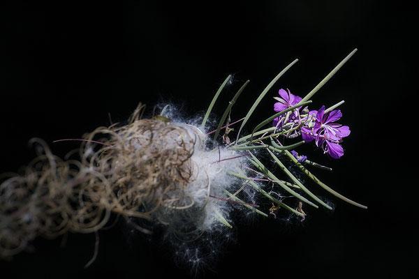 Es gibt viele Wunder - © Helga Jaramillo Arenas - Fotografie und Poesie / September 2019