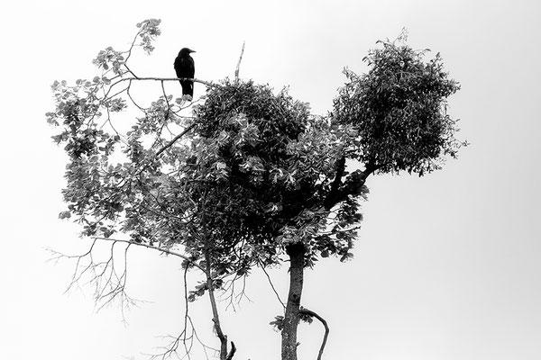 Abflug - © Helga Jaramillo Arenas - Fotografie und Poesie / Januar 2018