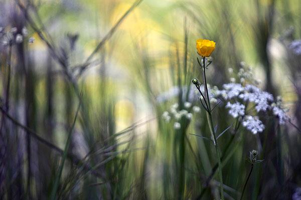 Zärtlich umgeben von fließendem Licht - © Helga Jaramillo Arenas - Fotografie und Poesie / Mai 2013