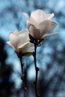 Blütentanz - © Helga Jaramillo Arenas - Fotografie und Poesie / Mai 2015