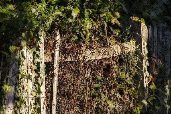 Der Zaun - © Helga Jaramillo Arenas - Fotografie und Poesie / August 2018