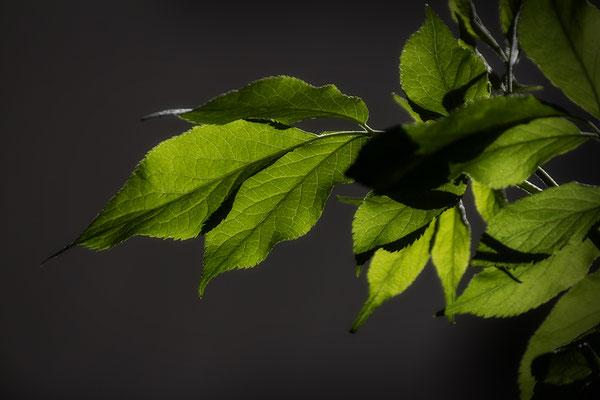 Das junge Grün - © Helga Jaramillo Arenas - Fotografie und Poesie / Mai 2019