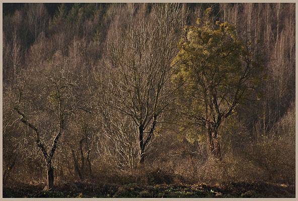 Der Schlaf im Winter - © Helga Jaramillo Arenas - Fotografie und Poesie / Januar 2012